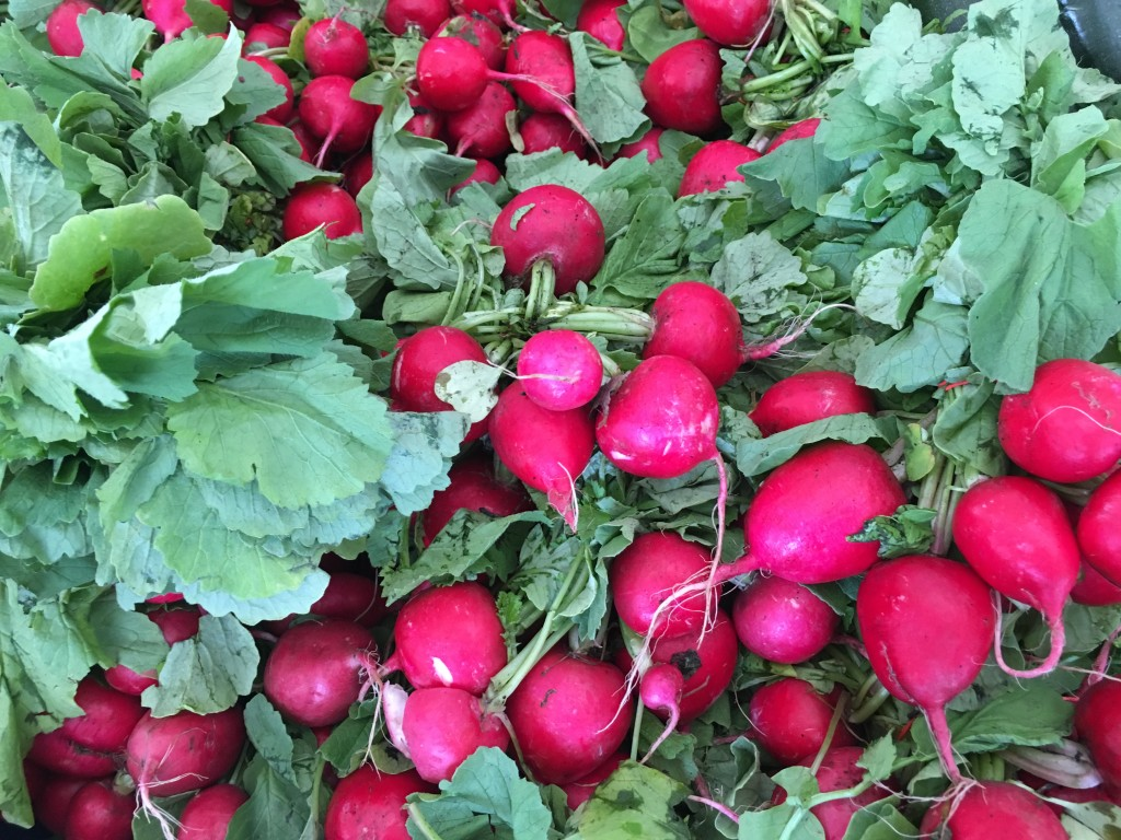 Winter Garden Farmer's Market Radishes